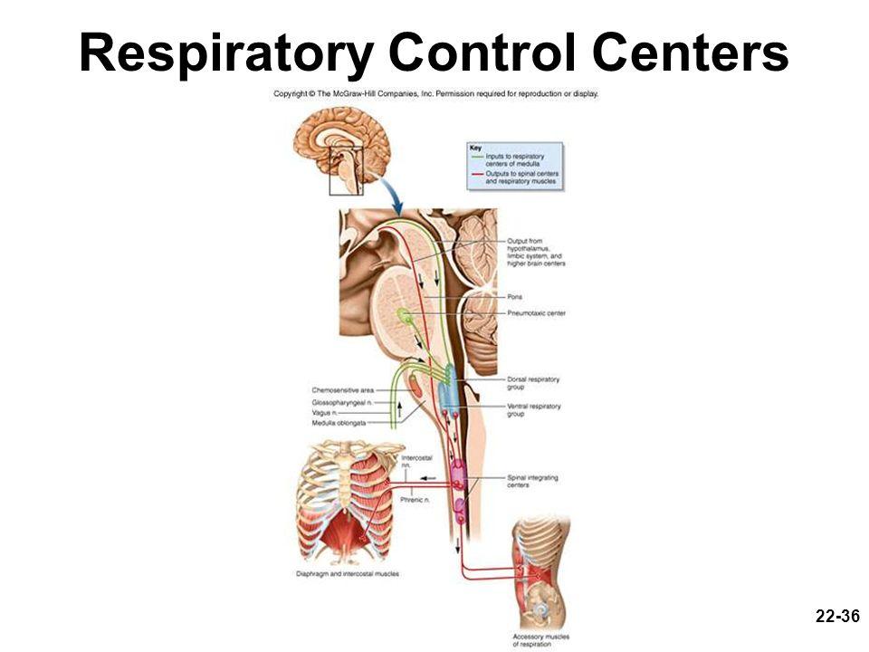 22-36 Respiratory Control Centers