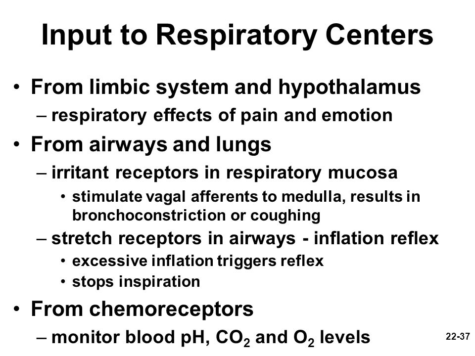 22-37 Input to Respiratory Centers From limbic system and hypothalamus –respiratory effects of pain and emotion From airways and lungs –irritant recep