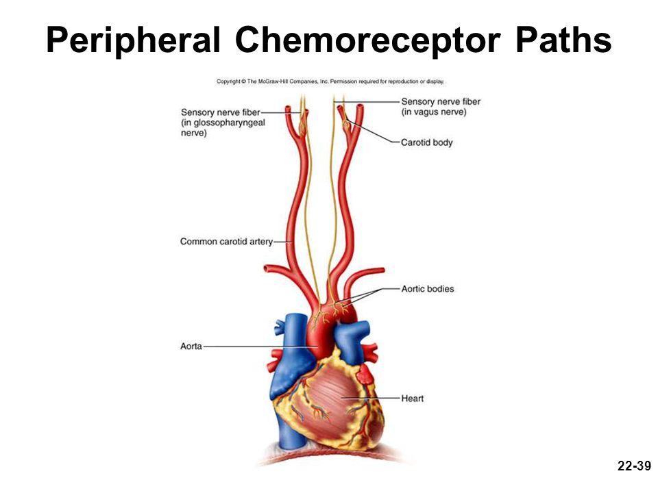 22-39 Peripheral Chemoreceptor Paths