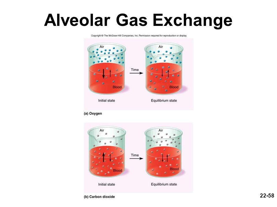22-58 Alveolar Gas Exchange