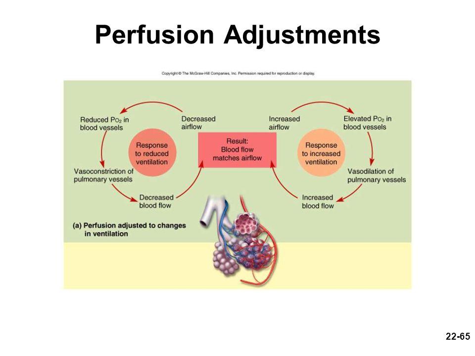 22-65 Perfusion Adjustments