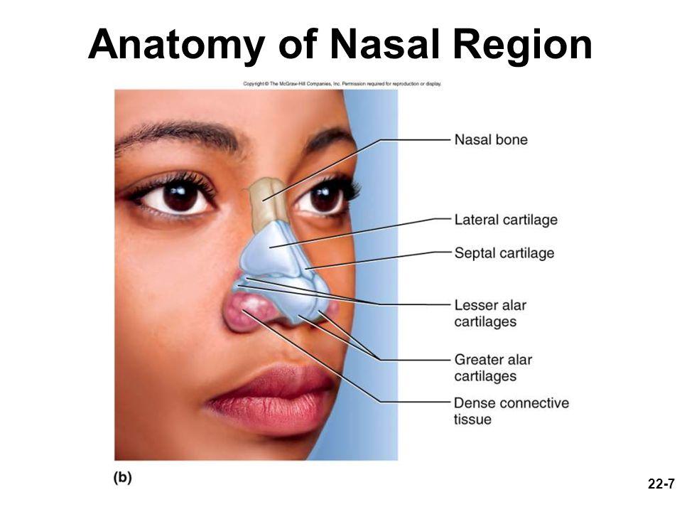 22-7 Anatomy of Nasal Region