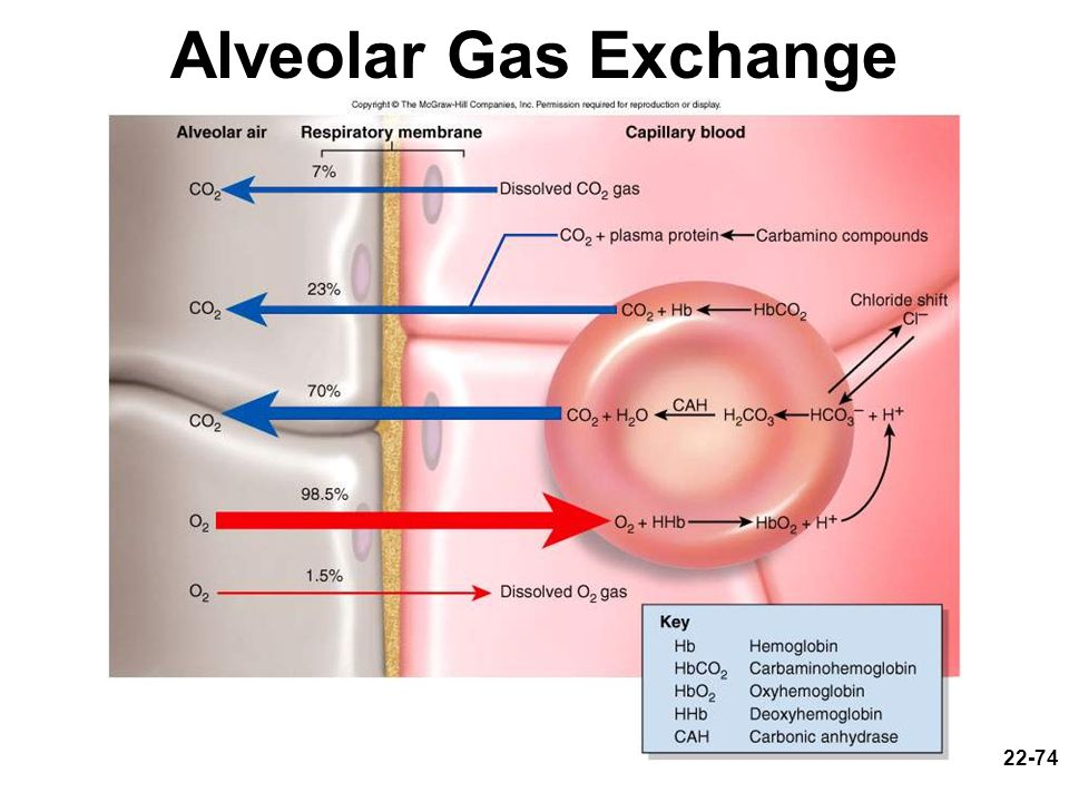 22-74 Alveolar Gas Exchange