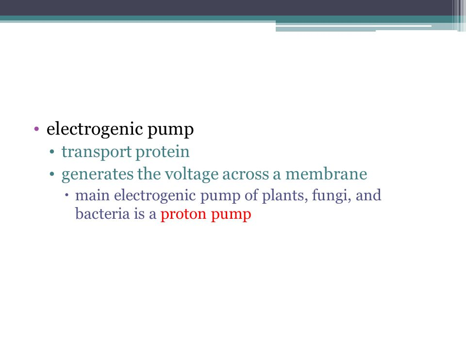 electrogenic pump transport protein generates the voltage across a membrane main electrogenic pump of plants, fungi, and bacteria is a proton pump