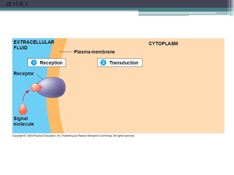 LE 11-5_1 EXTRACELLULAR FLUID Reception Plasma membrane Transduction CYTOPLASM Receptor Signal molecule