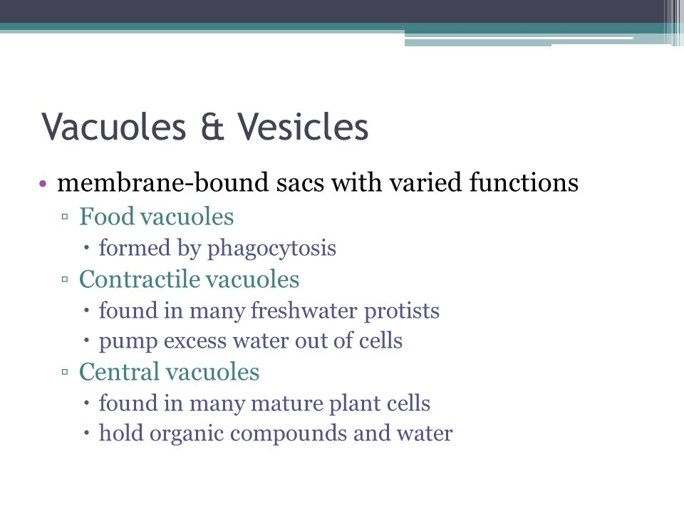 Vacuoles & Vesicles membrane-bound sacs with varied functions Food vacuoles formed by phagocytosis Contractile vacuoles found in many freshwater proti