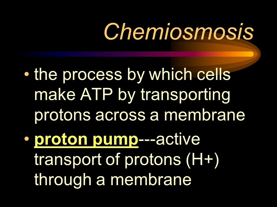Chemiosmosis the process by which cells make ATP by transporting protons across a membrane proton pump---active transport of protons (H+) through a me
