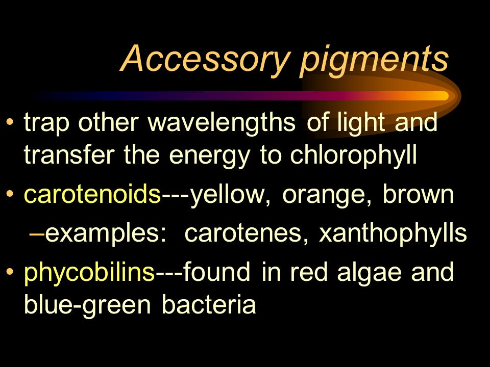 Accessory pigments trap other wavelengths of light and transfer the energy to chlorophyll carotenoids---yellow, orange, brown –examples: carotenes, xa