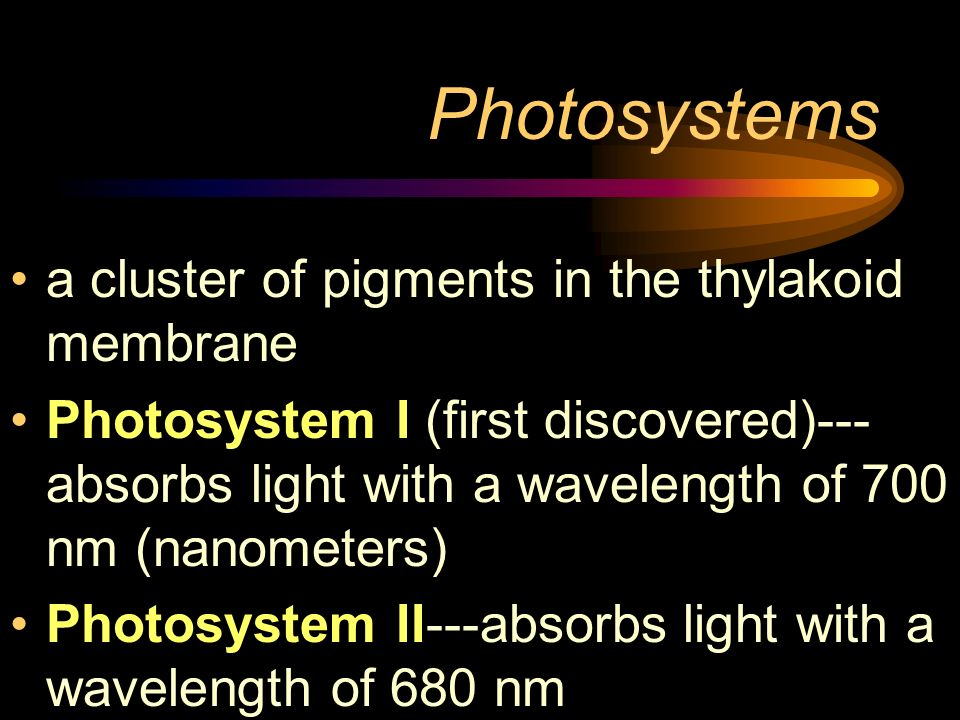 Photosystems a cluster of pigments in the thylakoid membrane Photosystem I (first discovered)--- absorbs light with a wavelength of 700 nm (nanometers