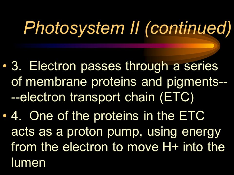 Photosystem II (continued) 3. Electron passes through a series of membrane proteins and pigments-- --electron transport chain (ETC) 4. One of the prot