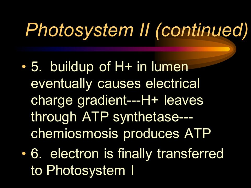 Photosystem II (continued) 5. buildup of H+ in lumen eventually causes electrical charge gradient---H+ leaves through ATP synthetase--- chemiosmosis p
