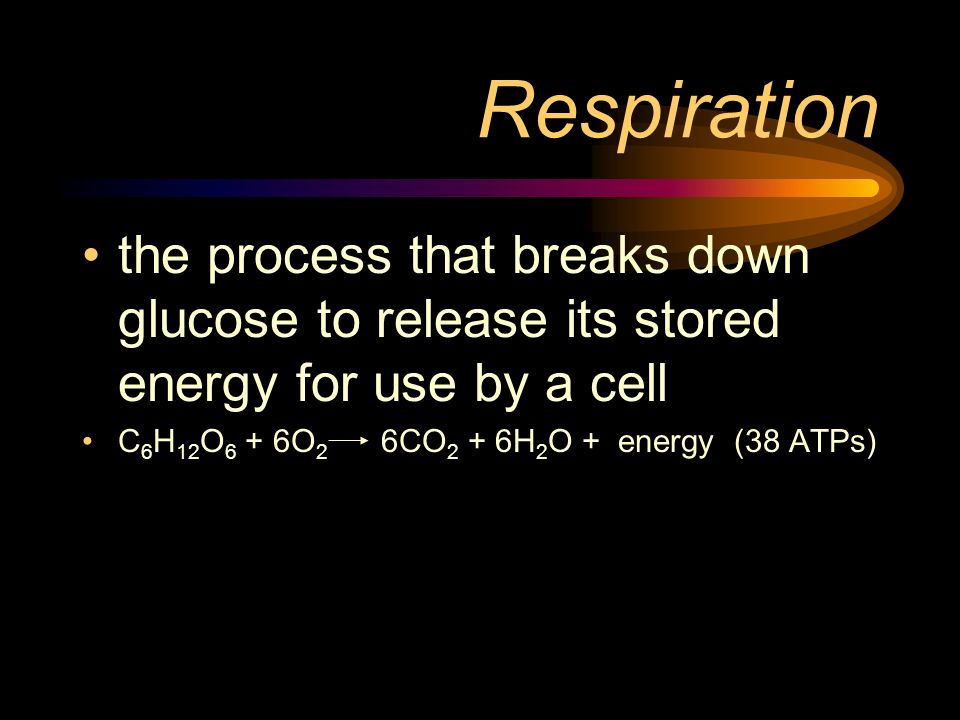 Respiration the process that breaks down glucose to release its stored energy for use by a cell C 6 H 12 O 6 + 6O 2 6CO 2 + 6H 2 O + energy (38 ATPs)