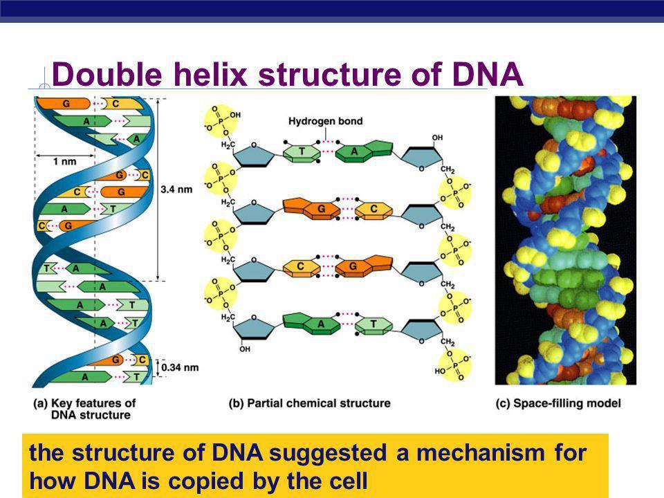 AP Biology 2005-2006 Rosalind Franklin (1920-1958)