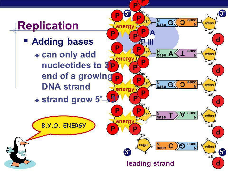 AP Biology 2005-2006 Energy of Replication The nucleotides arrive as nucleosides DNA bases with P–P–P DNA bases arrive with their own energy source fo
