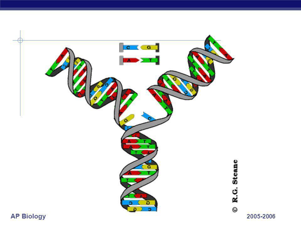 AP Biology 2005-2006 ligase energy 5' 3' 5' leading strand 3'5' 3' 5' lagging strand