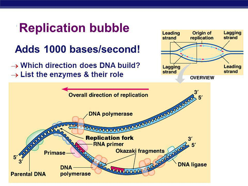 AP Biology 2005-2006 Telomeres Expendable, non-coding sequences at ends of DNA short sequence of bases repeated 1000s times TTAGGG in humans Telomeras