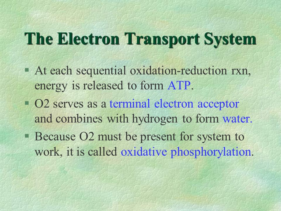 The Electron Transport System §At each sequential oxidation-reduction rxn, energy is released to form ATP. §O2 serves as a terminal electron acceptor