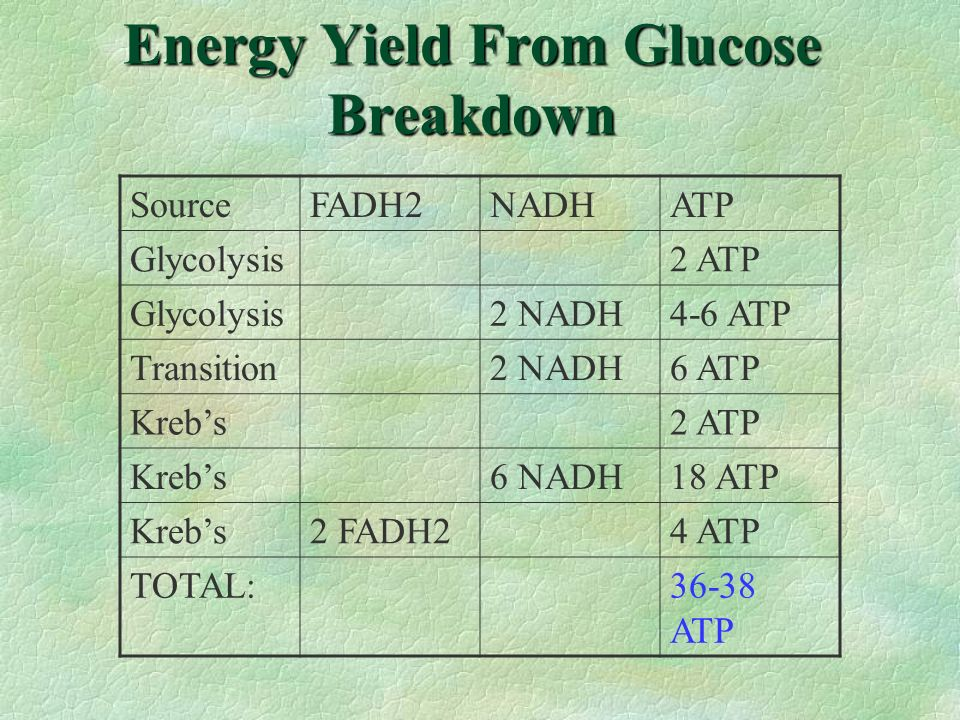 Energy Yield From Glucose Breakdown SourceFADH2NADHATP Glycolysis2 ATP Glycolysis2 NADH4-6 ATP Transition2 NADH6 ATP Krebs2 ATP Krebs6 NADH18 ATP Kreb