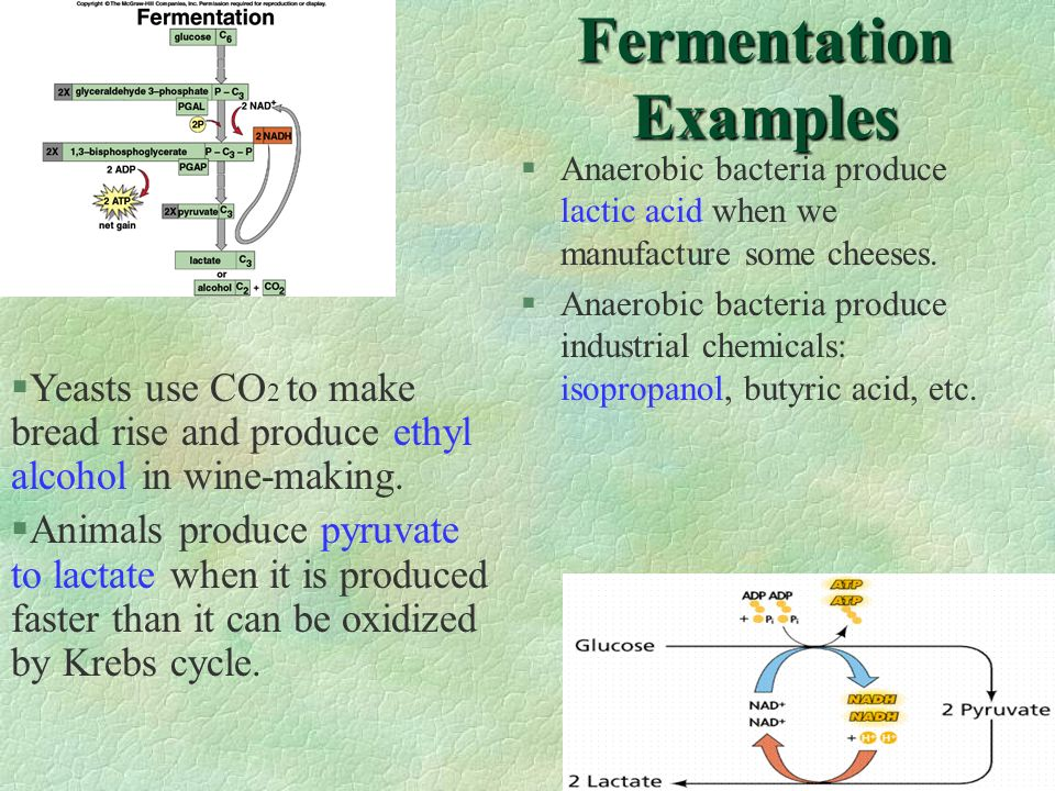 Fermentation Examples §Anaerobic bacteria produce lactic acid when we manufacture some cheeses. §Anaerobic bacteria produce industrial chemicals: isop