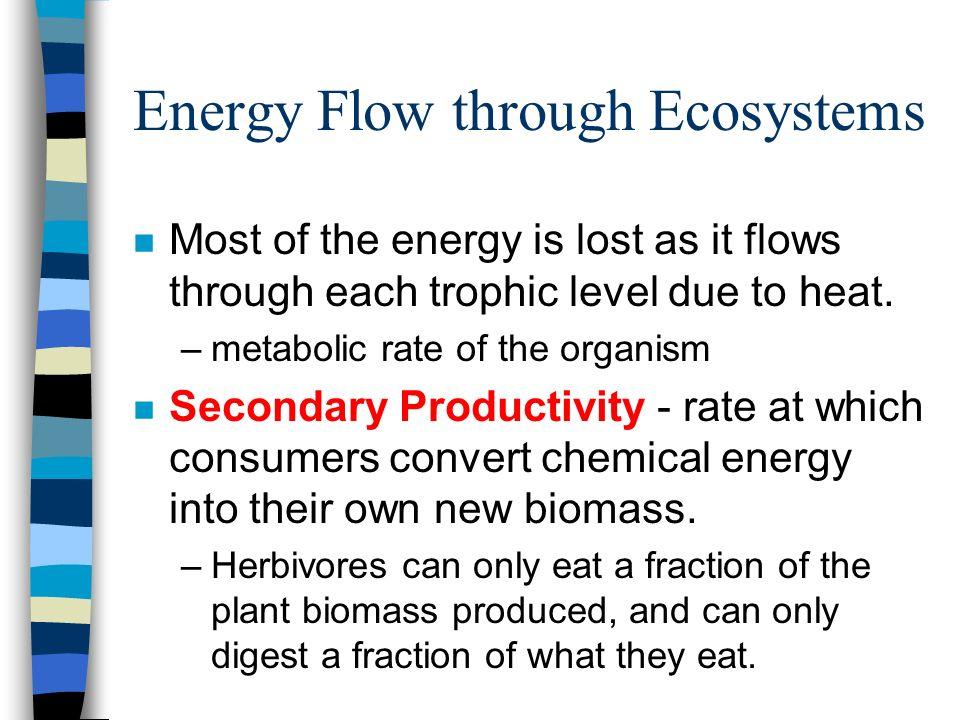 Energy Flow through Ecosystems n Most of the energy is lost as it flows through each trophic level due to heat. –metabolic rate of the organism n Seco