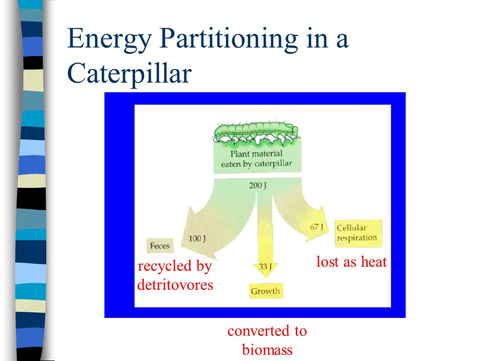 Energy Partitioning in a Caterpillar lost as heat converted to biomass recycled by detritovores