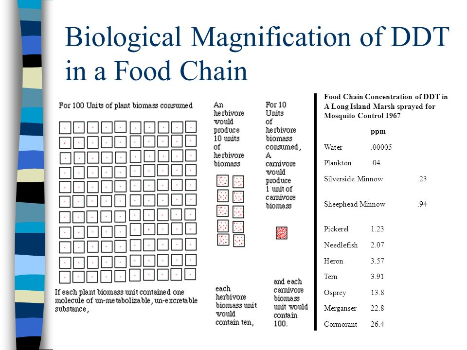 Biological Magnification of DDT in a Food Chain Food Chain Concentration of DDT in A Long Island Marsh sprayed for Mosquito Control 1967 ppm Water.000