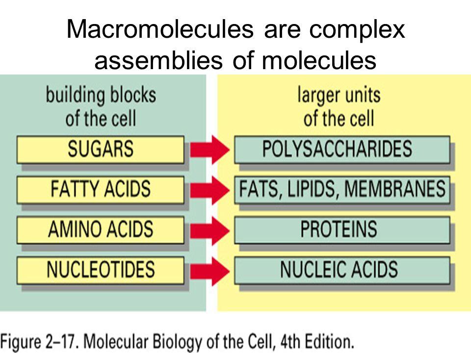 Macromolecules are complex assemblies of molecules