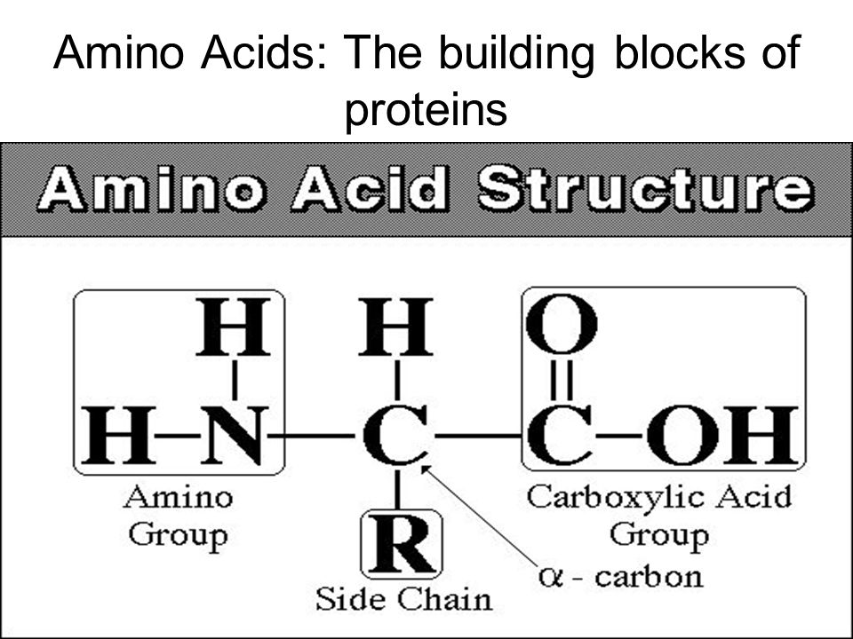 Amino Acids: The building blocks of proteins