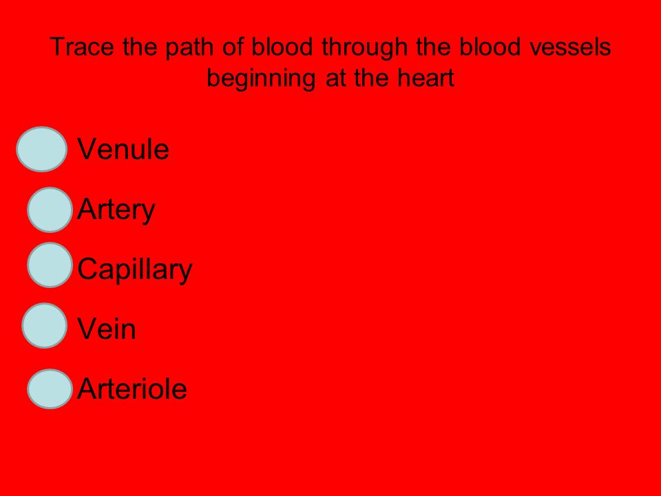 Trace the path of blood through the blood vessels beginning at the heart 4Venule 1Artery 3Capillary 5Vein 2Arteriole