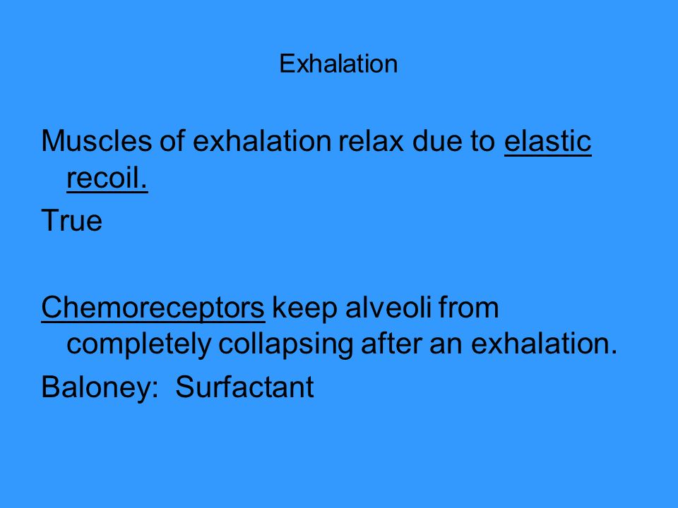 Exhalation Muscles of exhalation relax due to elastic recoil. True Chemoreceptors keep alveoli from completely collapsing after an exhalation. Baloney