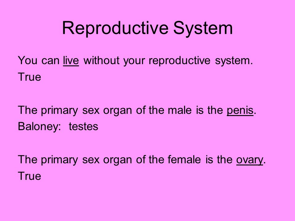 Reproductive System You can live without your reproductive system. True The primary sex organ of the male is the penis. Baloney: testes The primary se