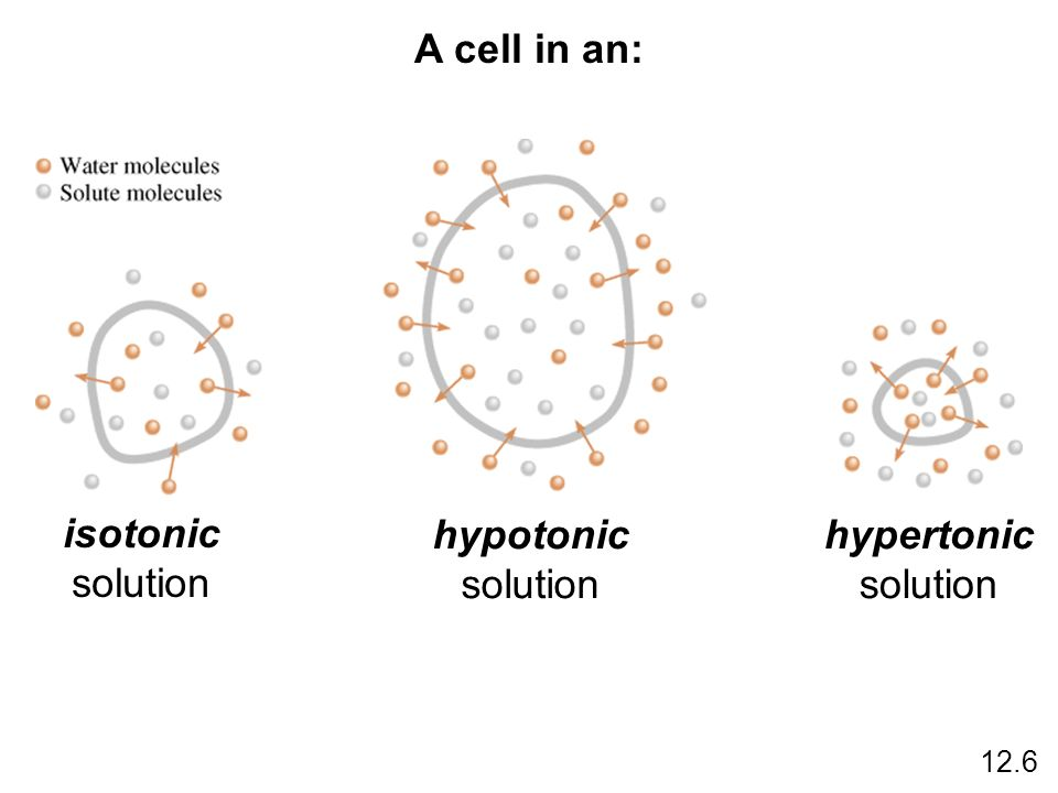 A cell in an: isotonic solution hypotonic solution hypertonic solution 12.6