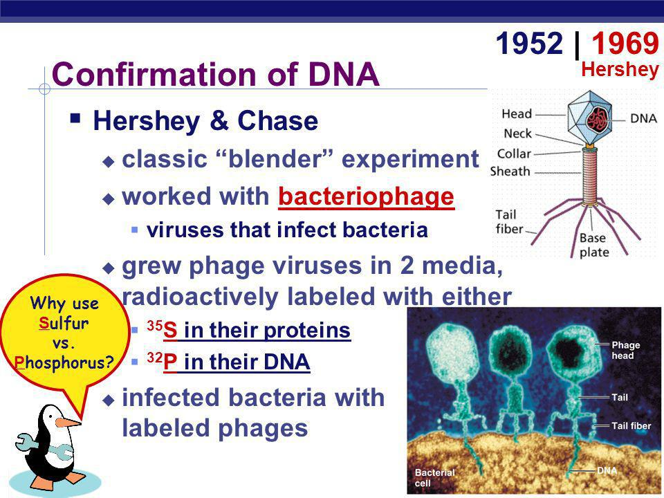 AP Biology Oswald AveryMaclyn McCartyColin MacLeod Avery, McCarty & MacLeod Conclusion first experimental evidence that DNA was the genetic material 1