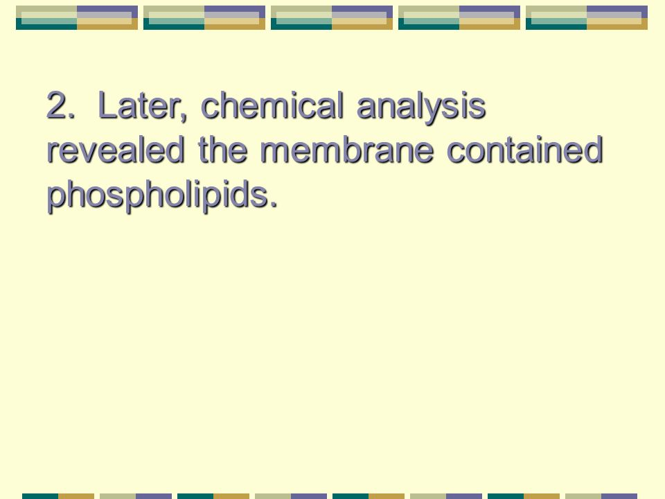 2. Later, chemical analysis revealed the membrane contained phospholipids.