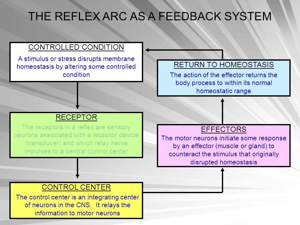 THE REFLEX ARC AS A FEEDBACK SYSTEM CONTROLLED CONDITION A stimulus or stress disrupts membrane homeostasis by altering some controlled condition RECE
