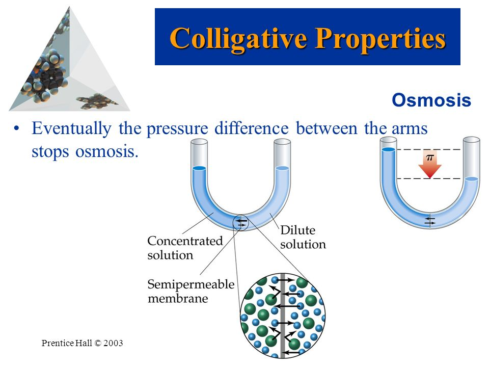 Prentice Hall © 2003Chapter 13 Osmosis Eventually the pressure difference between the arms stops osmosis. Colligative Properties