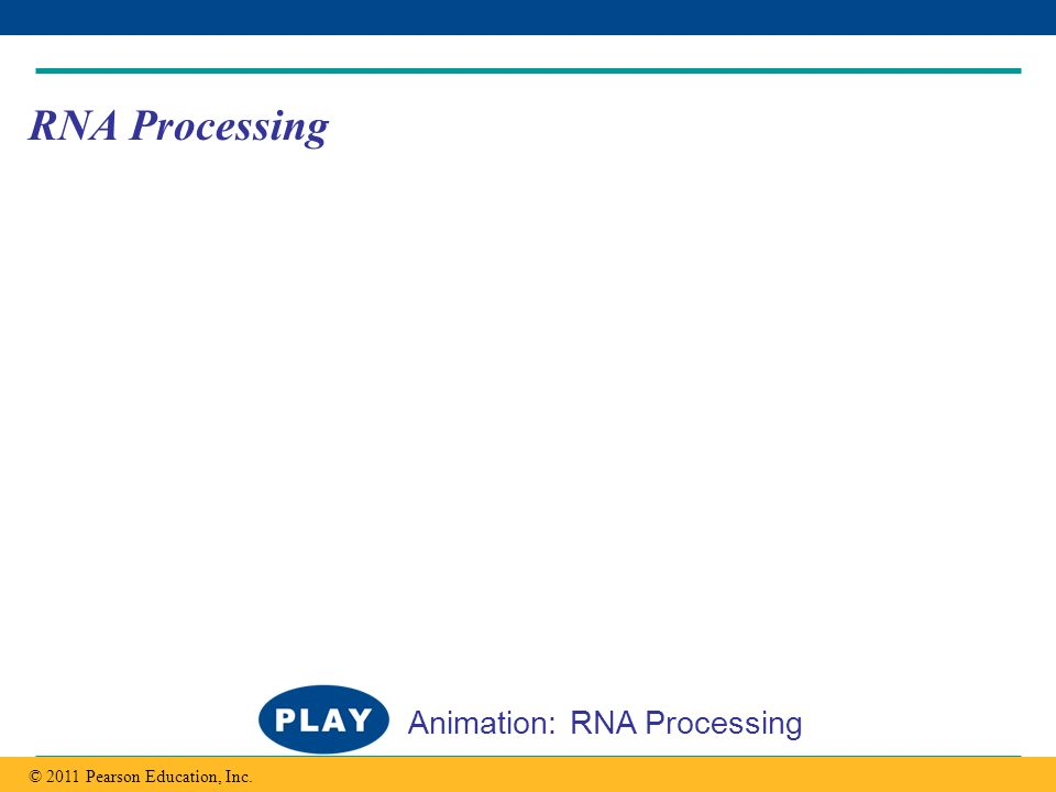 Copyright © 2005 Pearson Education, Inc. publishing as Benjamin Cummings RNA Processing © 2011 Pearson Education, Inc. Animation: RNA Processing