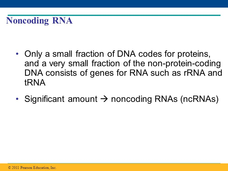 Copyright © 2005 Pearson Education, Inc. publishing as Benjamin Cummings Noncoding RNA Only a small fraction of DNA codes for proteins, and a very sma