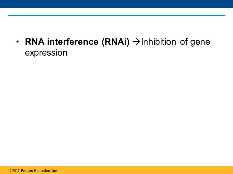 Copyright © 2005 Pearson Education, Inc. publishing as Benjamin Cummings RNA interference (RNAi) Inhibition of gene expression © 2011 Pearson Educatio
