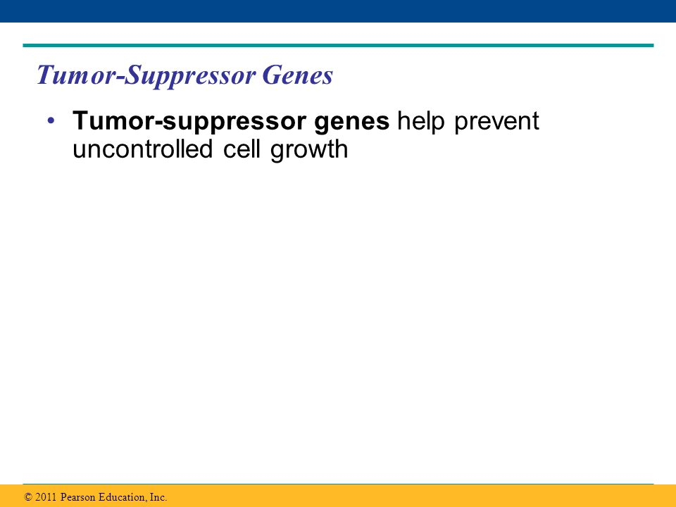Copyright © 2005 Pearson Education, Inc. publishing as Benjamin Cummings Tumor-Suppressor Genes Tumor-suppressor genes help prevent uncontrolled cell