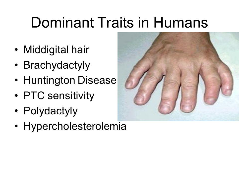 Dominant Traits in Humans Middigital hair Brachydactyly Huntington Disease PTC sensitivity Polydactyly Hypercholesterolemia