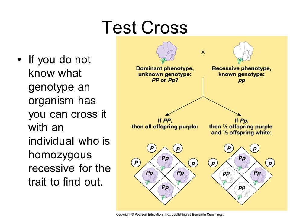 Test Cross If you do not know what genotype an organism has you can cross it with an individual who is homozygous recessive for the trait to find out.