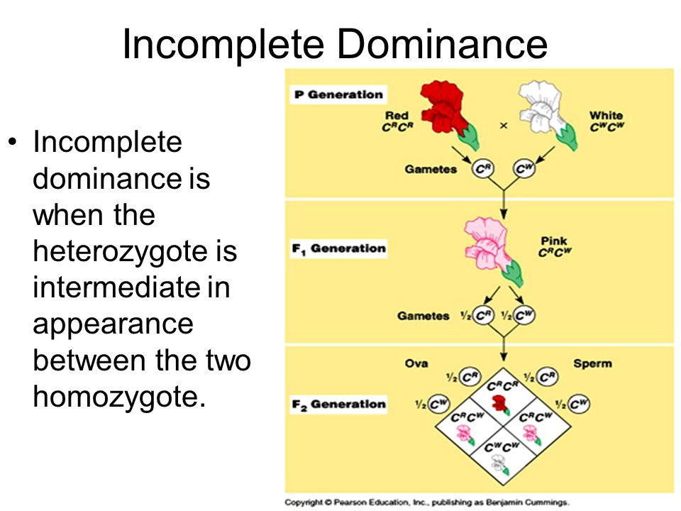 Incomplete Dominance Incomplete dominance is when the heterozygote is intermediate in appearance between the two homozygote.