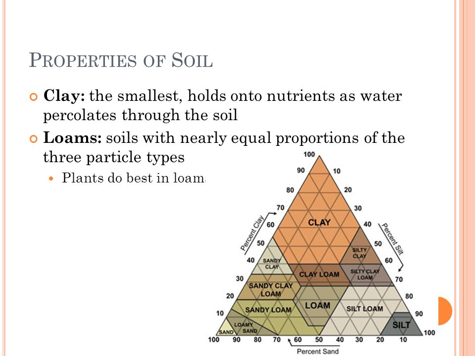 P ROPERTIES OF S OIL Clay: the smallest, holds onto nutrients as water percolates through the soil Loams: soils with nearly equal proportions of the t