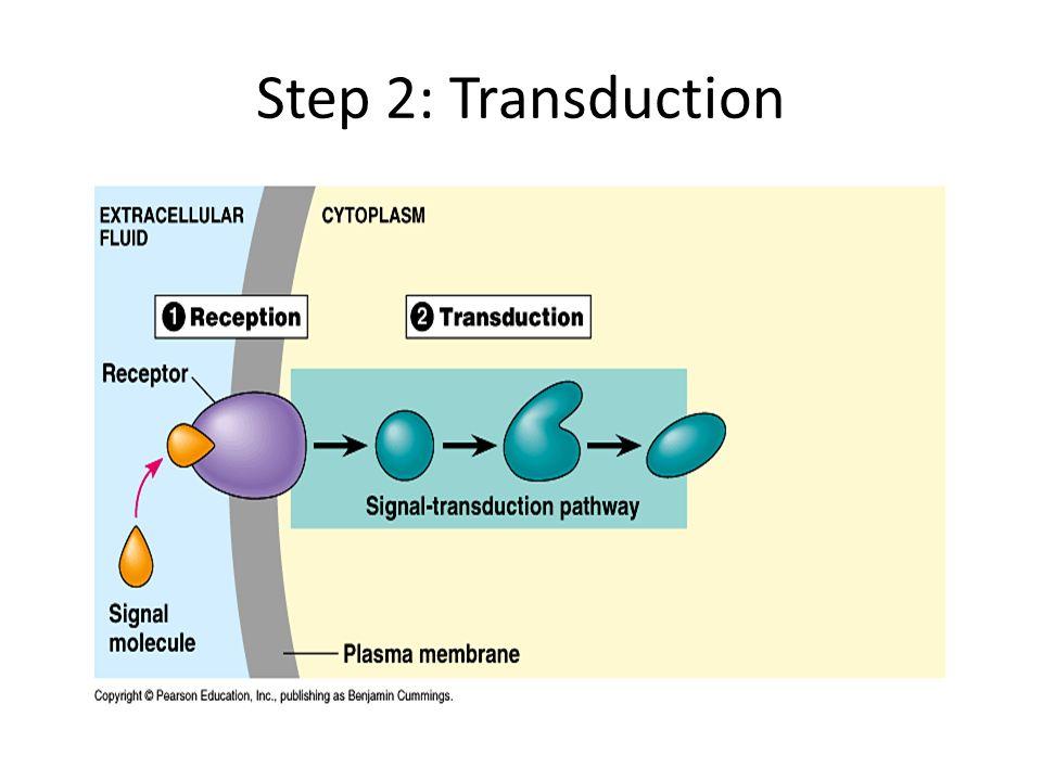 Step 2: Transduction