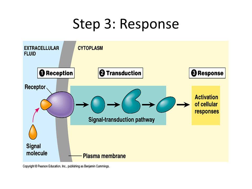Step 3: Response