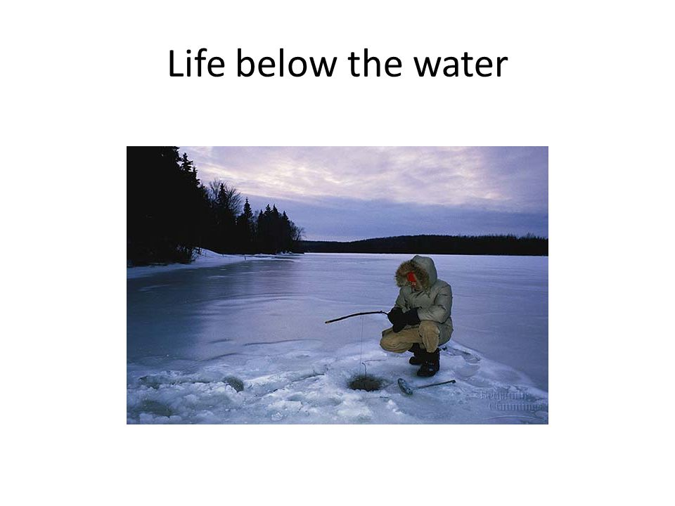 Life below the water