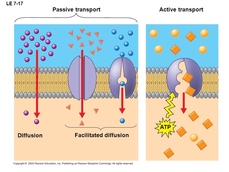 LE 7-17 Diffusion Facilitated diffusion Passive transport ATP Active transport