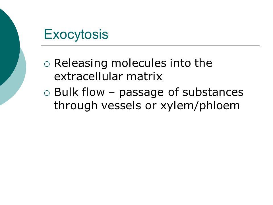 Exocytosis Releasing molecules into the extracellular matrix Bulk flow – passage of substances through vessels or xylem/phloem