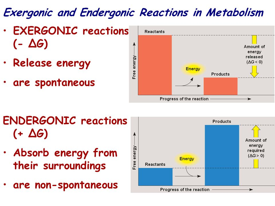 Exergonic and Endergonic Reactions in Metabolism EXERGONIC reactions (- G) Release energy are spontaneous ENDERGONIC reactions (+ G) Absorb energy fro